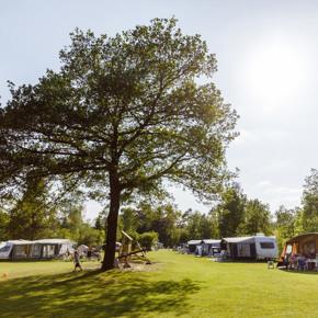 RCN-vakantiepark-de-Roggeberg-kampeerveld (1)
