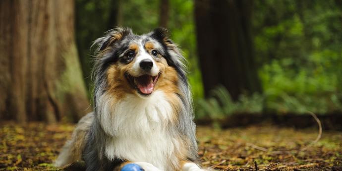 Vakantie met de hond in Verdon