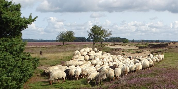 National Park Dwingelerveld