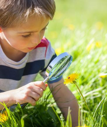 Maak van je tuin een vlindertuin