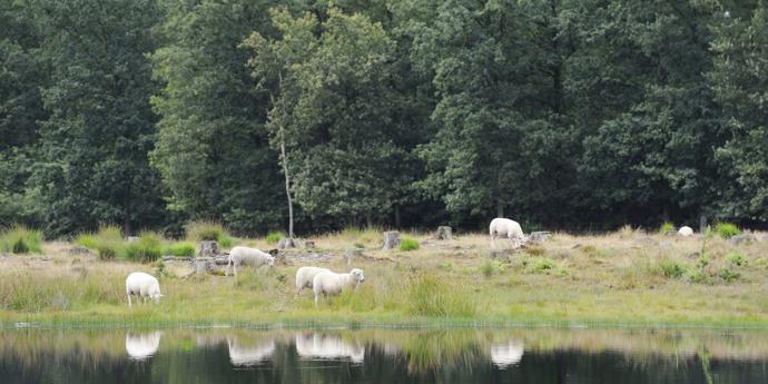 Drents-Friese Wold National Park