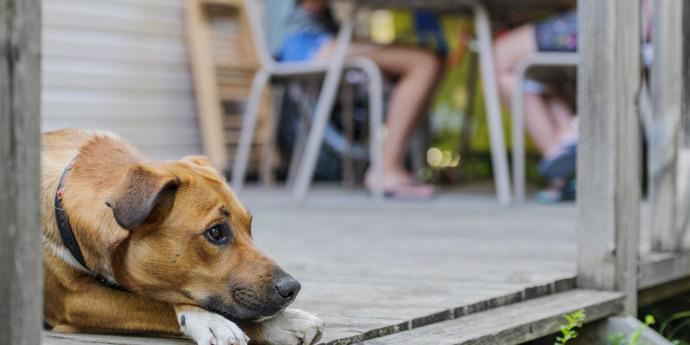Last Minute Urlaub mit Hund in Holland